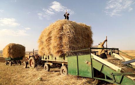 پرداخت تمام مطالبات کشاورزان