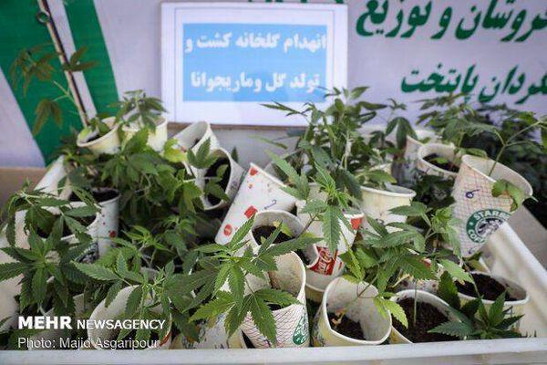مجازات اعدام در انتظار پرورش دهندگان «گل»