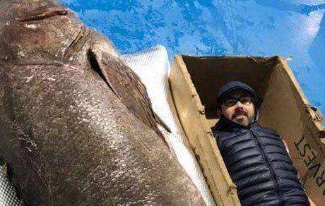 بزرگترین ماهی خاردار جهان صید شد +عکس