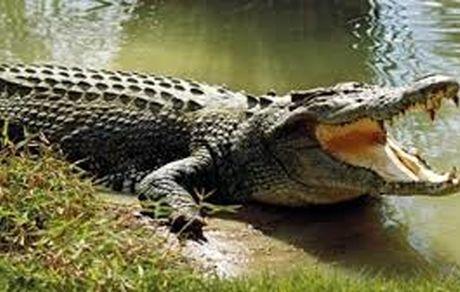 عملیات جستجوی تمساح در دریاچه چیتگر آغاز شد + عکس