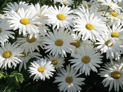 درباره گیاهان, قوانین اجتناب از گیاهان سمی