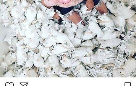 موشبازی دختر آزاده نامداری + عکس
