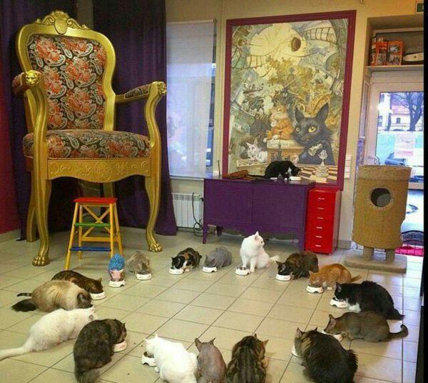 گربههای موزه هرمیتاژ