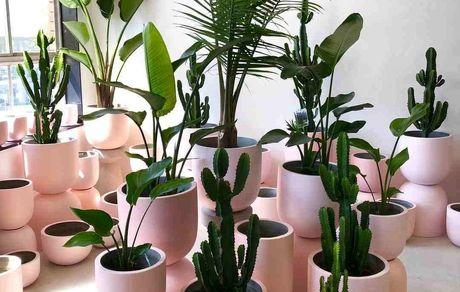 نگهداری گیاهان در خانه عوارض آلودگی هوای خانهها را کم میکند