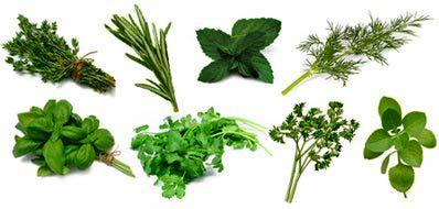 آسیب های ناشی از گیاهان سمی, بیماری پوستی گیاهان سمی