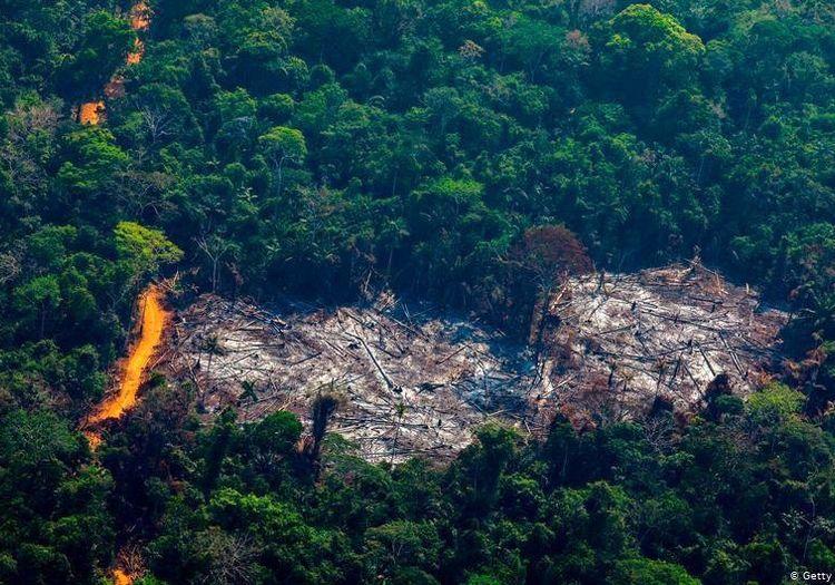 جنگلهای آمازون در حال نابودی است