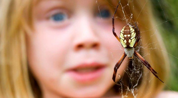 رایج ترین فوبیاهای دنیا - عنکبوت هراسی یا آراکنوفوبیا