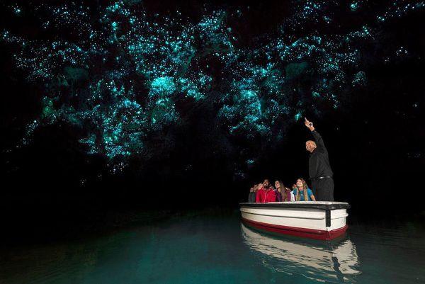 غارهای مملو از کرم شب تاب در نیوزیلند