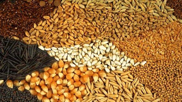 تأمین نهادههای دامی با دو برابر قیمت