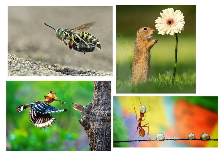عکسهای برنده شده در مسابقات عکاسی حیات وحش