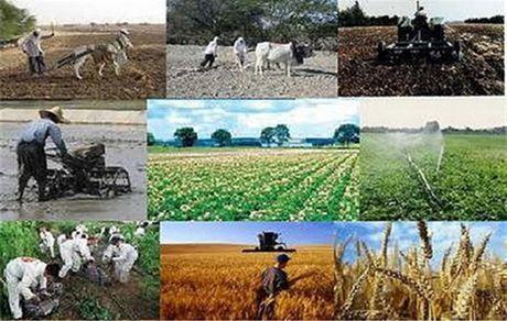 وابستگی بسیاری از بخش های کشاورزی برطرف شده است