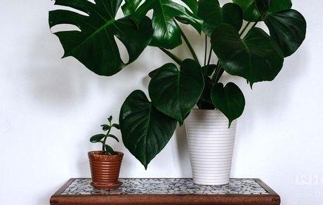 ۷ گیاه آپارتمانی سازگار با نور کم برای خانه شما
