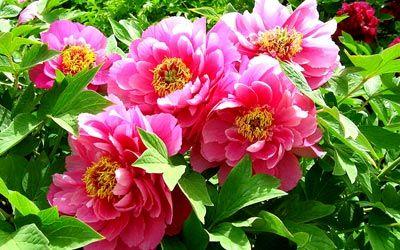 مسمومیت گل های سمی, درباره گل های سمی