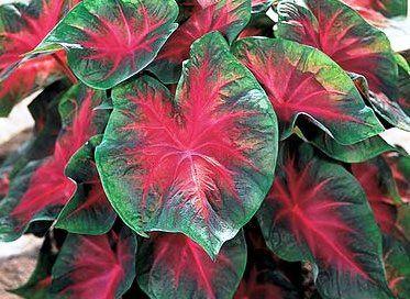 مسمومیت گل های سمی,آسیب های گیاهان سمی
