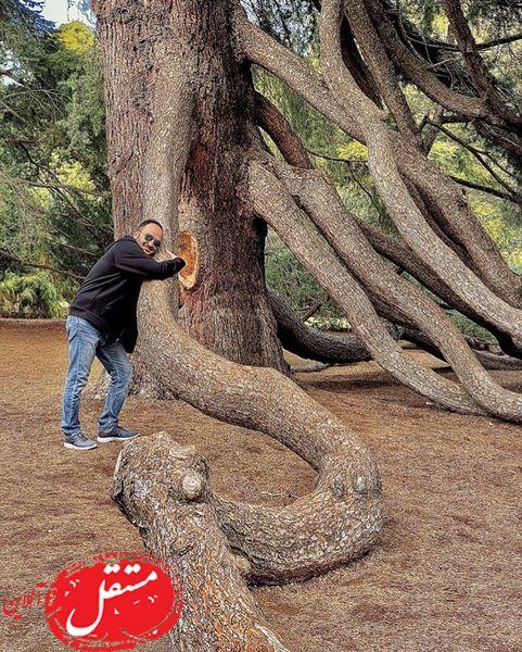 آقای مجری در زیر درخت عظیم الجثه + عکس