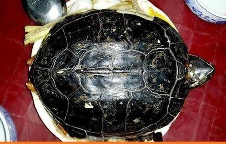 اجبار بیماران مبتلا به کرونا برای خوردن سوپ لاکپشت