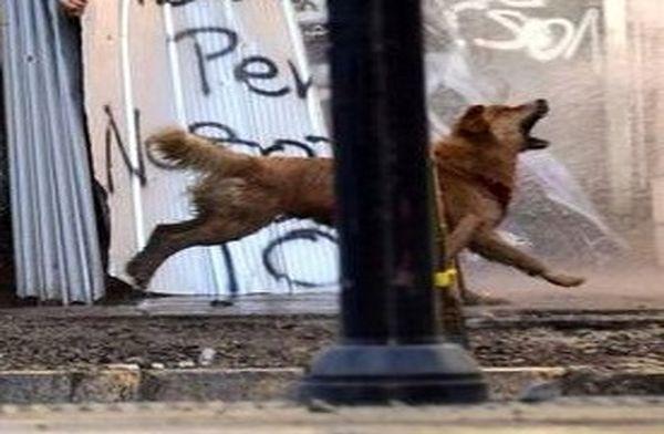 سگی که سوژه رسانههای دنیا شد